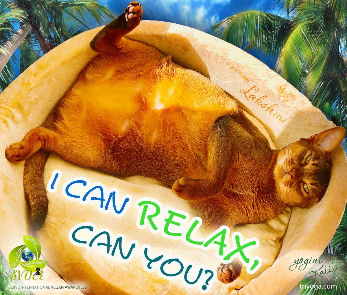 FB_SIVA_Lakshmi_relax