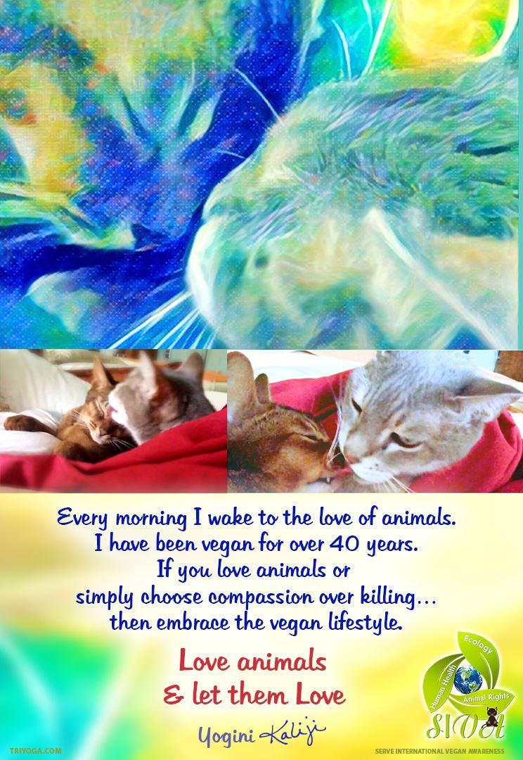KJI_SIVA_love_animals_let_them_love