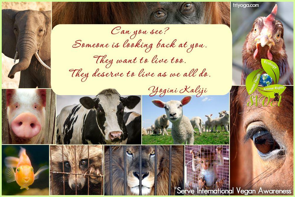 YoginiKaliji_SIVA_vegan_look_see