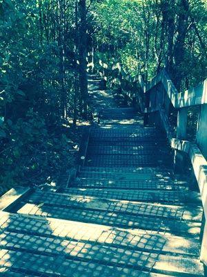 NZ_Rangitoto_stairs