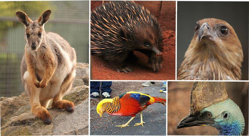Wildpark animals