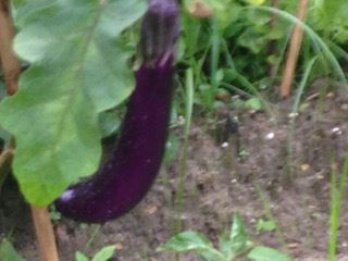 TY_Retreat_eggplant