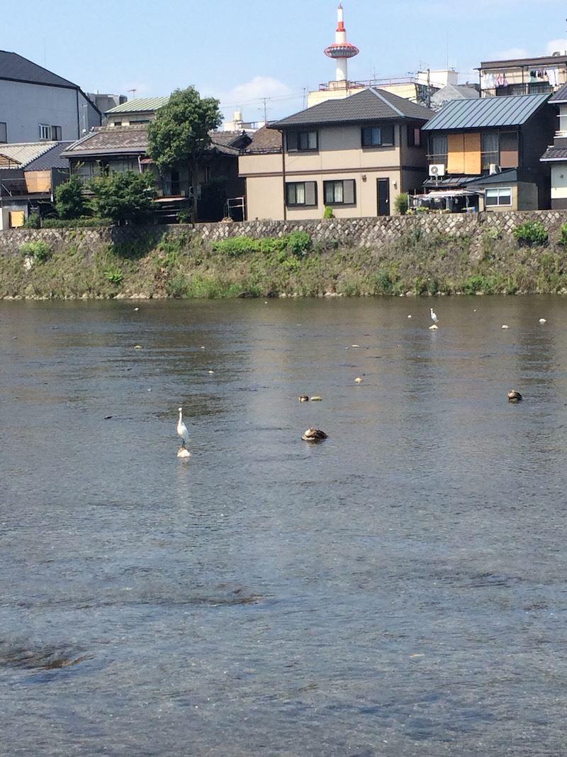 Kyoto_Crane