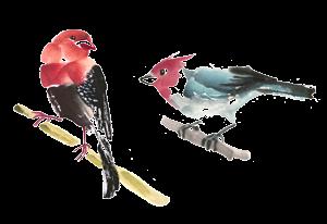 Birds_chinese