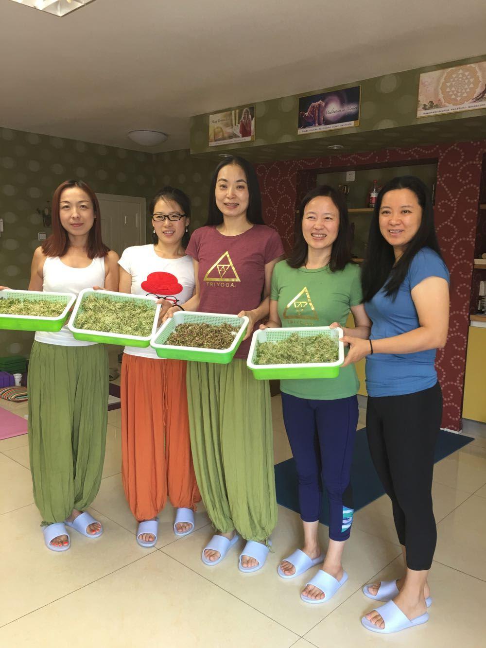 Beijing_Basisc_2017_Sprouts