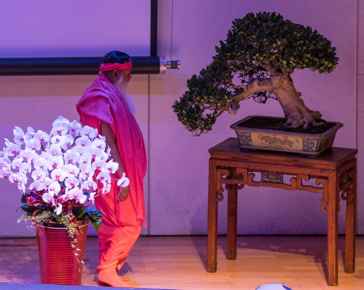 SS_concert_bonsai